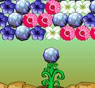 Hoa cỏ mùa xuân