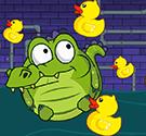 Tắm cho cá sấu
